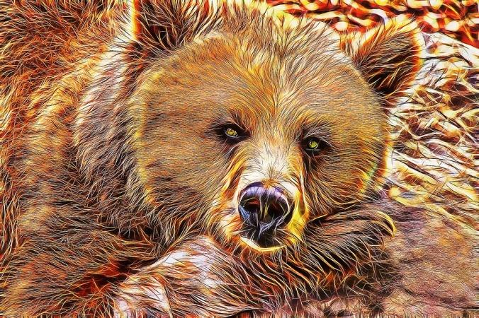 bear-1254509_960_720