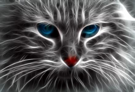 cat-1280122_960_720